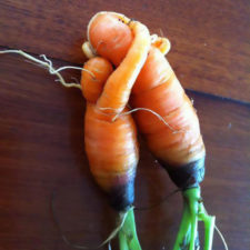 Fruit vegetables in unusual shapes 5 587380a34e918__700.jpg