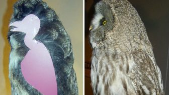 Owls without feathers 16 1.jpg