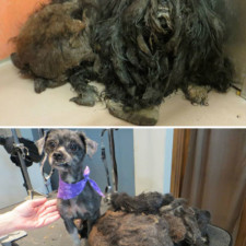 Rescue dogs before after adoption 12 586658d84ae7c__700.jpg