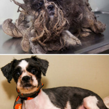 Rescue dogs before after adoption 14 586658dd47a88__700.jpg