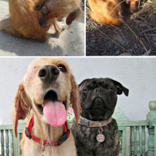 Rescue dogs before after adoption 17 586658e465272__700.jpg