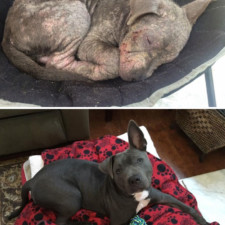 Rescue dogs before after adoption 2 586658bfae247__700.jpg