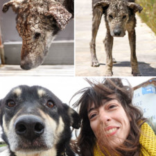 Rescue dogs before after adoption 3 586658c295e11__700.jpg