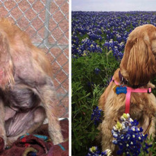Rescue dogs before after adoption 6 586658ca3881c__700.jpg