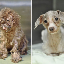Rescue dogs before after adoption 7 586658cc24c42__700.jpg