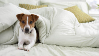 http://www.thinkstockphotos.com/search/#dog in the house/s=DynamicRank/f=CTPIHVX