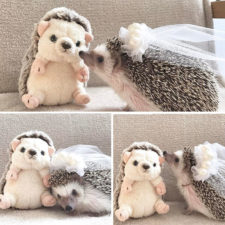 Cute hedgehogs 91 589339ad7ec98__700.jpg