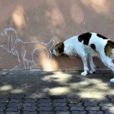 242455 perfectly timed photos 2 650 610356611c 1484640730.jpg
