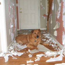 Share the mess your pets made when you left them alone 103 58eb9f7181796__700.jpg