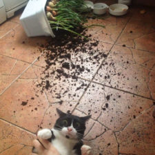 Share the mess your pets made when you left them alone 105 58ec7587d2e75__700.jpg