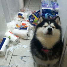 Share the mess your pets made when you left them alone 106 58ec84942c98b__700.jpg