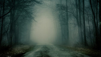 Foggy road into the woods.