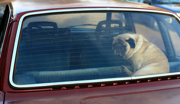 Fried egg experiment parked car dont leave dogs hot weather 18.jpg