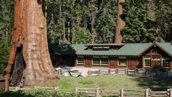 Giant sequoia tree mayor revenge story 10.jpg