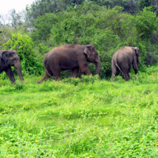 Wildlife forest protection sai sanctuary india 58f8975d4cf02__700.jpg