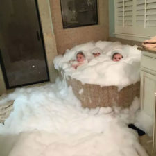 Share what happens when you leave your kids alone 100 595520899a618__700.jpg