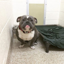 Internet helps shelter dog find home mack frank tank 1 599426fd1e170__700.jpg