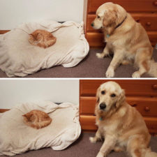Cats dogs not getting along hate living together 2 59b10d1493b69__605.jpg