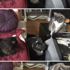 Cats dogs not getting along hate living together 3 59b1112825349__605.jpg