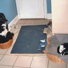 Cats dogs not getting along hate living together 44 59b262f14c13d__605.jpg