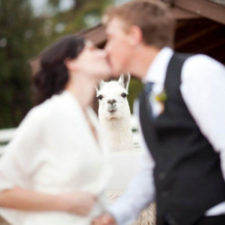 Funny wedding photobombs 144 5a005582ad008__700.jpg
