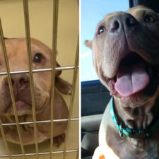 Happy dogs before after adoption 14 5a95364c45fb7__880.jpg
