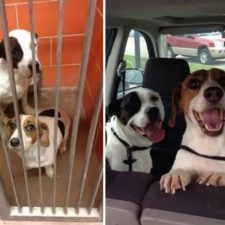 Happy dogs before after adoption 15 5a95370e3b911__880.jpg