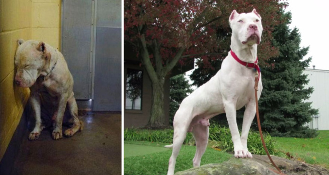Happy dogs before after adoption 79 5a9544efa99c9__880.jpg