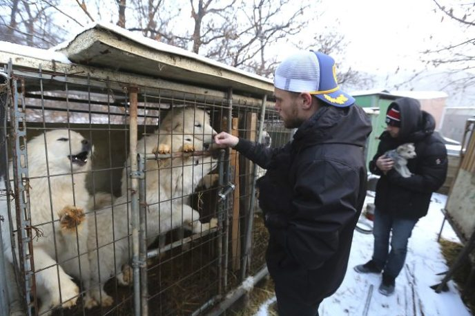 American skier saves 90 dogs at south korea olympics 5a9518ccdfcf8__700.jpg