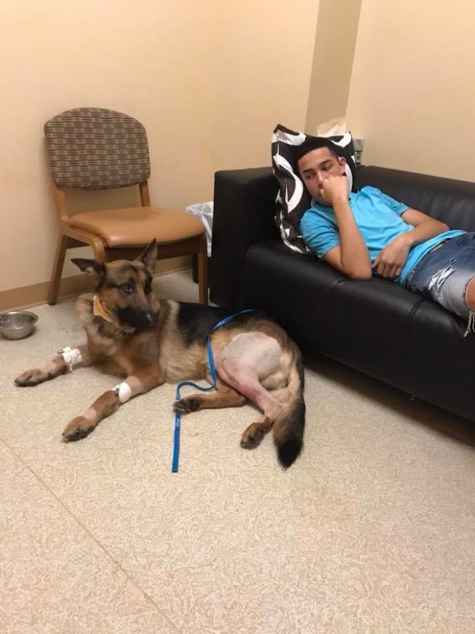 Dog hero almost loses his life by saving his owner from criminals 5a93e71a4b696__700.jpg