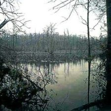 Http://www.theparanormalguide.com/blog/the lizard man of lee county