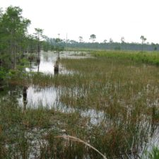 Https://pixnio.com/nature landscapes/wetlands and swamps/wooden swamps and drainages