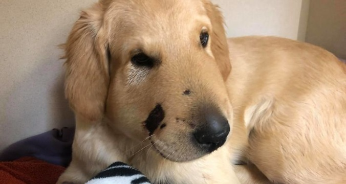 Puppy saves his owner from a rattlesnake attack by taking his bite 5b3ab541a66c3__700.jpg