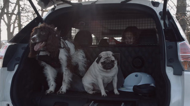 Dog friendly car.jpg