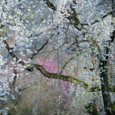 National geographic photo of the day internet favorites 2015 30__880.jpg