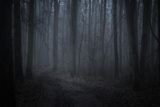 Dark foggy forest in twilight