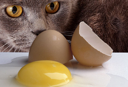 Jiu_rf_photo_of_cat_eying_broken_raw_egg.jpg