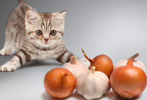Jiu_rf_photo_of_kitten_vs_onions_and_garlic.jpg