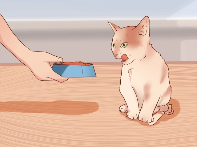Make raw cat food step 10 version 2.jpg