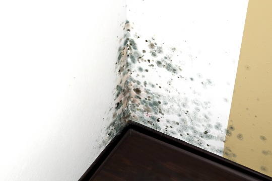 Mold in house.jpg
