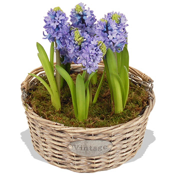 Blue hyacinth basket.jpg
