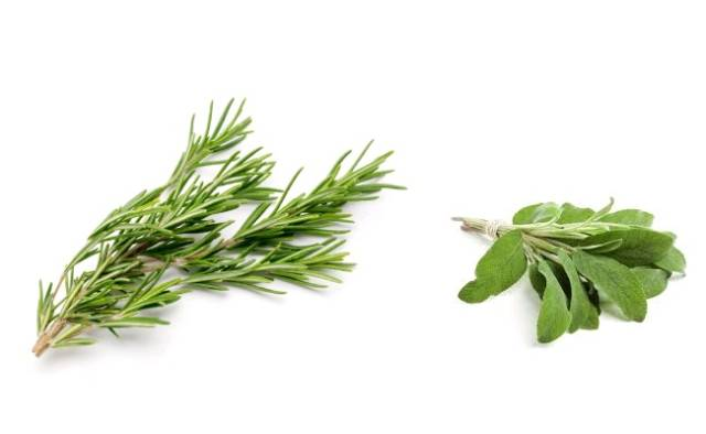 Rosemary and sage.jpg