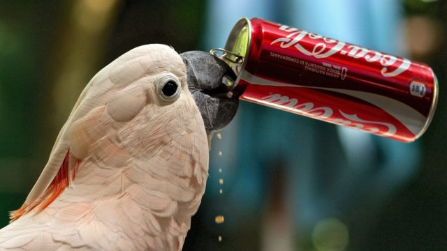 Sweet white parrot drinking coca cola_1920x1080.jpg