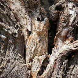 Amazing wild animal camouflage nature 8 59258edad4f22__700.jpg
