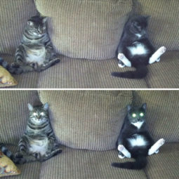 Hey pandas share pics of your cat acting weird 121 593509188c1ec__700.jpg