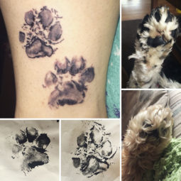 Pet paws tattoos 308 59b7d7f28f6d5__700.jpg