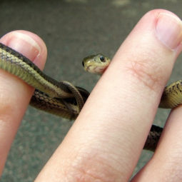 Cute snake pictures 2 5a018b9428300__700.jpg