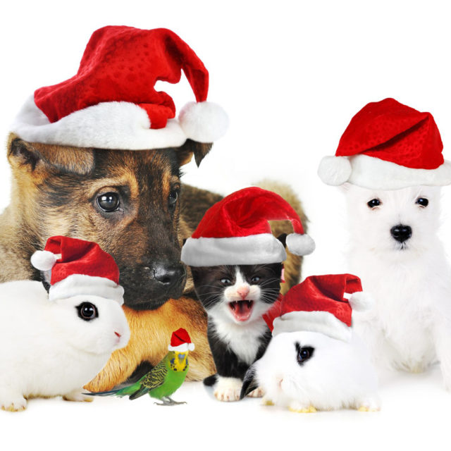 Dogs at christmas wallpaper.jpg