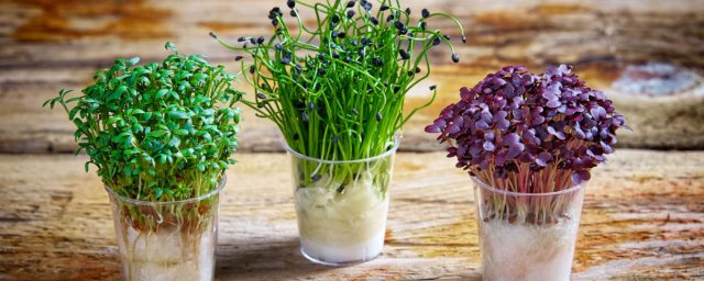 How to grow cress banner nj3z97hx2ihvz55auim7d0m77b94tyfve48sufppa8.jpg