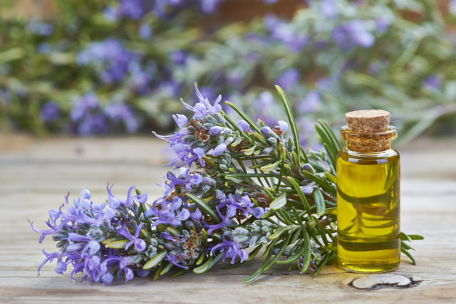 Rosemary for lengthening hair magic recipes.jpg
